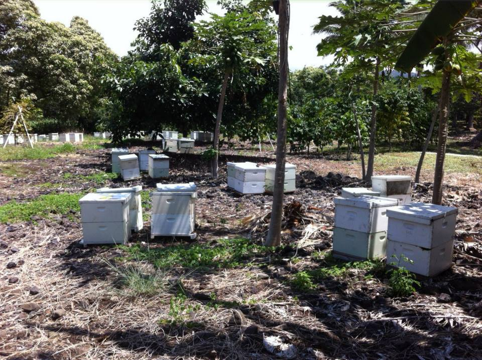 Captain's Ohana Farm honey bee hives